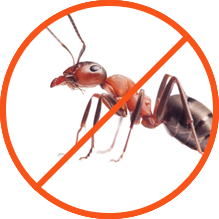 We help you remove your ants