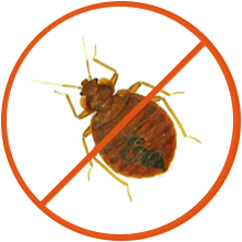 We clean your bedbugs