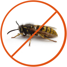 We will help you eliminate your Wasp nest.